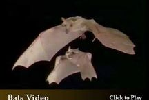 How to Attract Bats and Bat Houses