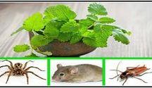 remedios contra insectos