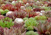 Crazy for Succulents / by Garden Design