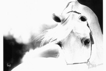 All The Pretty Horses / So I'm a barn rat. / by Caitlin Nicole
