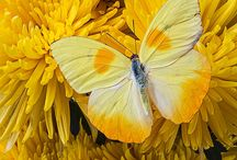 Keltainen - Yellow