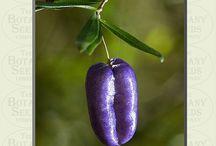 Garden | Unusual Edibles / by Elizabeth