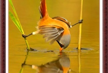 Ninja bird / Hareket