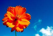 Color - Orange & Blue