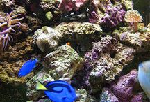Saltwater Aquarium Ideas