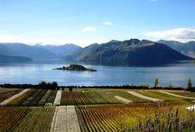 Views of the vineyard / Rippon Vineyard throughout the seasons