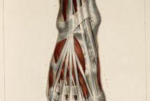 feet anatomy