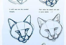 animals draw basic