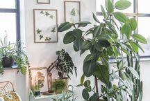 plant corner