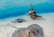 discover > my aqua playground / discover places yet to explore on and under the seas