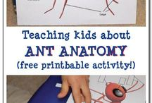 Bugs ~ Ant Theme / Everything ants! Ant crafts, ant printables, ant activities for kids and more!