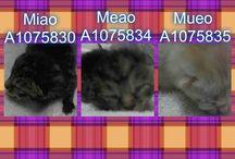 gatinhos resem nascidos