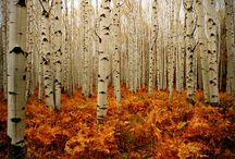 Oxygen ~ Trees, Woods, Forest  / The clearest way into the universe is through a forest wilderness.  John Muir