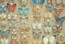 Butterflies! / by Marce Sarmiento