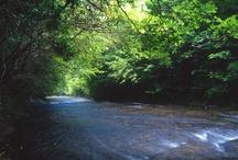 渓谷・渓流・名水 Ravines・Mountain Streams・Famous Waters