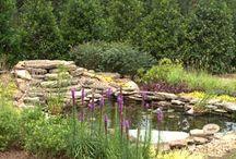From My Garden... or my 'Hope' Garden!