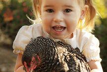 Fairy tale about black hen