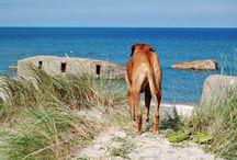 Reiseziele für Hundehalter / Hier findet ihr tolle Reiseziele mit Hund