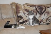 Kitties I Love