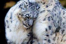 Wild Cats!!