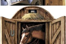 Jessica's horses