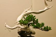 艺-bonsai