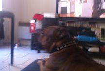 Photo de chien / Ma chienne est fofolle et calme à la fois elle en cache des choses !!