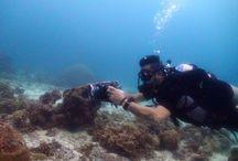 Liquid Media Koh Tao / Scuba Diving Thailand