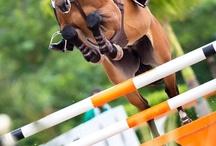 Heste der springer