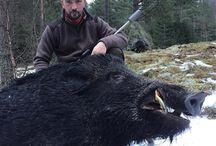 Boar shooting