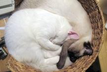 Kitty Love / Kitties are like Friends & Family