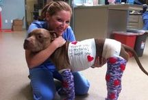 Calling all Earth angels! / Animals in need of help!  Adopt/ Rescue/ Donate/ Sign Petitions / by Brandy Penelope