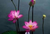 Virág kép