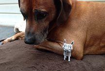DIY Zebra / The adventures of Zebra.....