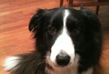 Lila / La bella Lila il cane più bello che c'è