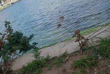 lagos, lagoas, rios