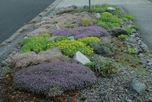 parking strip projects / by Voila Viola