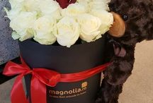 Box Flower Arrangements/ Aranjamente florale in cutie