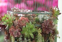 Für den zukünftigen Garten ;)