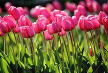 Champs et Jardins / Ce sont toutes (ou presque) des macros que j'ai téléchargées sur le net. J'adore ces superbes fleurs, qu'elles soient mauvaises herbes ou non, avec le fond flou et coloré d'une manière différente...  En attendant que je prenne mes photos...bientôt...