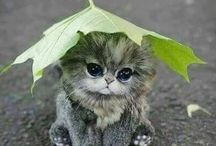 cute animals (kitten)