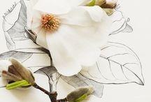 Flowers / by Tiffany Chou