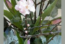 bloemen voorjaar