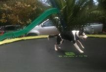 Animals <3 trampolines