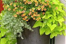 Flowerbed ideas / by mom dean