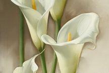 Kwiaty / Obrazy kwiatów