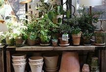 Potting sheds/shelves