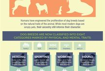 Canine science / What's behind the scenes of dog training?