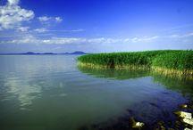 Lake Balaton / Lake Balaton is a freshwater lake in Hungary. It is the largest lake in Central Europe. Wonderful place!