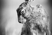 Hare / by Graomys